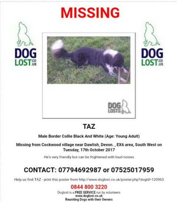 Taz the collie went missing from Cockwood near Dawlish in October