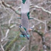 Pics of Stover Country Park taken  Friday 25 Jan 2019.