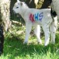 SAY IT WITH A EWE